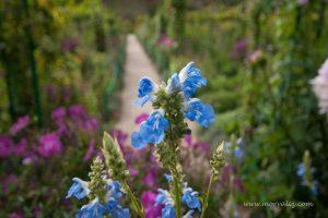 Giverny , Monet'nin bahçesi