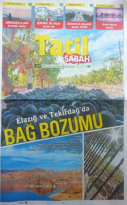 Sabah Gazetesi Fatoş Pur Bağbozumu