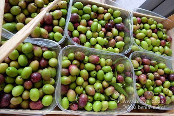 Puglia-zeytin