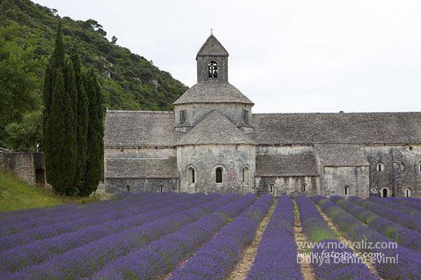 Abbaye-lavanta